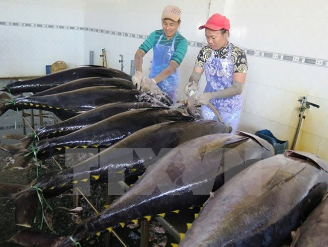 tien giang strives to catch 98000 tonnes of seafood this year
