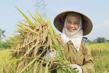 rice sector needs breakthrough strategy