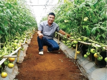 dutch plant seeds of cooperation in vietnam