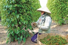 vietnamese farm produce urgently seeking name recognition