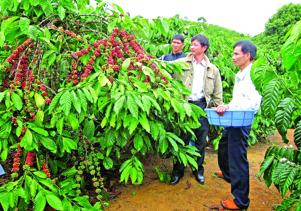 vietnam strives for record crop exports in 2019
