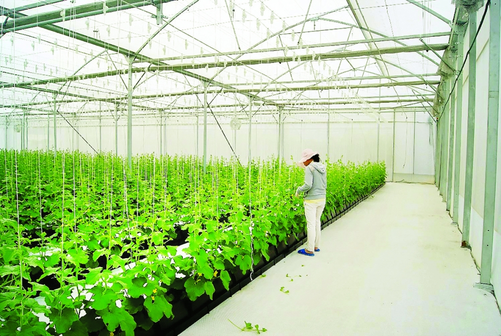 hcmc to pay interest on agriculture production loans