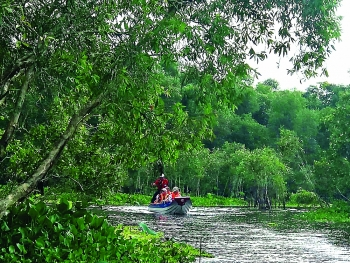 the cool wonders of the tra su mangrove forest