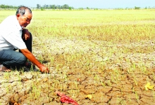protecting farmers from climate affect a priority un
