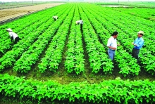 young officials to join agricultural cooperatives