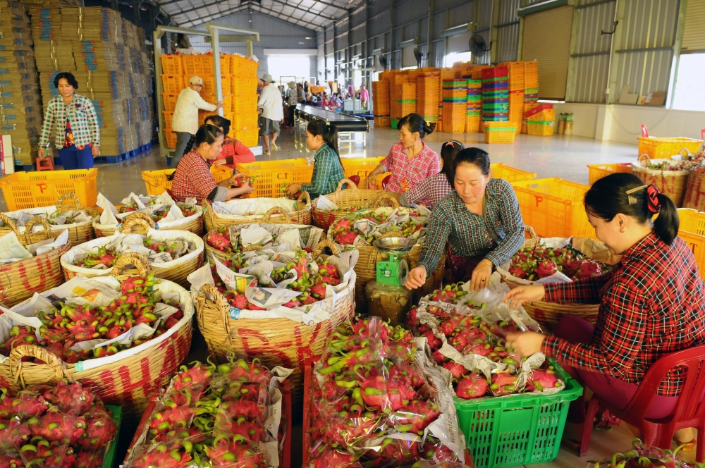 weak linkages result in low competitiveness of farm products