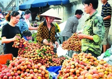 vietnam mulls strategies to restructure farming sector