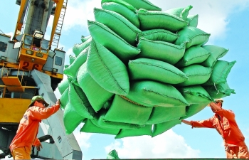 vietnams rice exports boom outpacing other produce exports