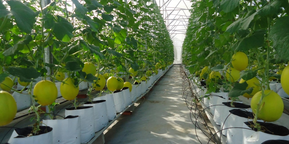high tech improves farm produce quality