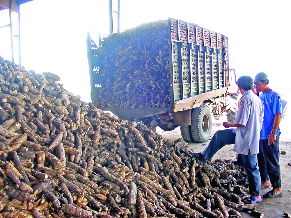 vietnam mastering extraction of nano cellulose from cassava