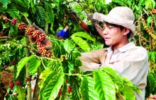 project improves coffee quality in lam dong province