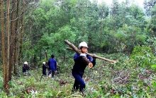 afforestation ensures sustainable timber exports