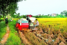 land regrouping in hanoi suburbs benefits farmers