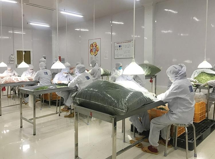 lam dong province supports enterprises hit by pandemic