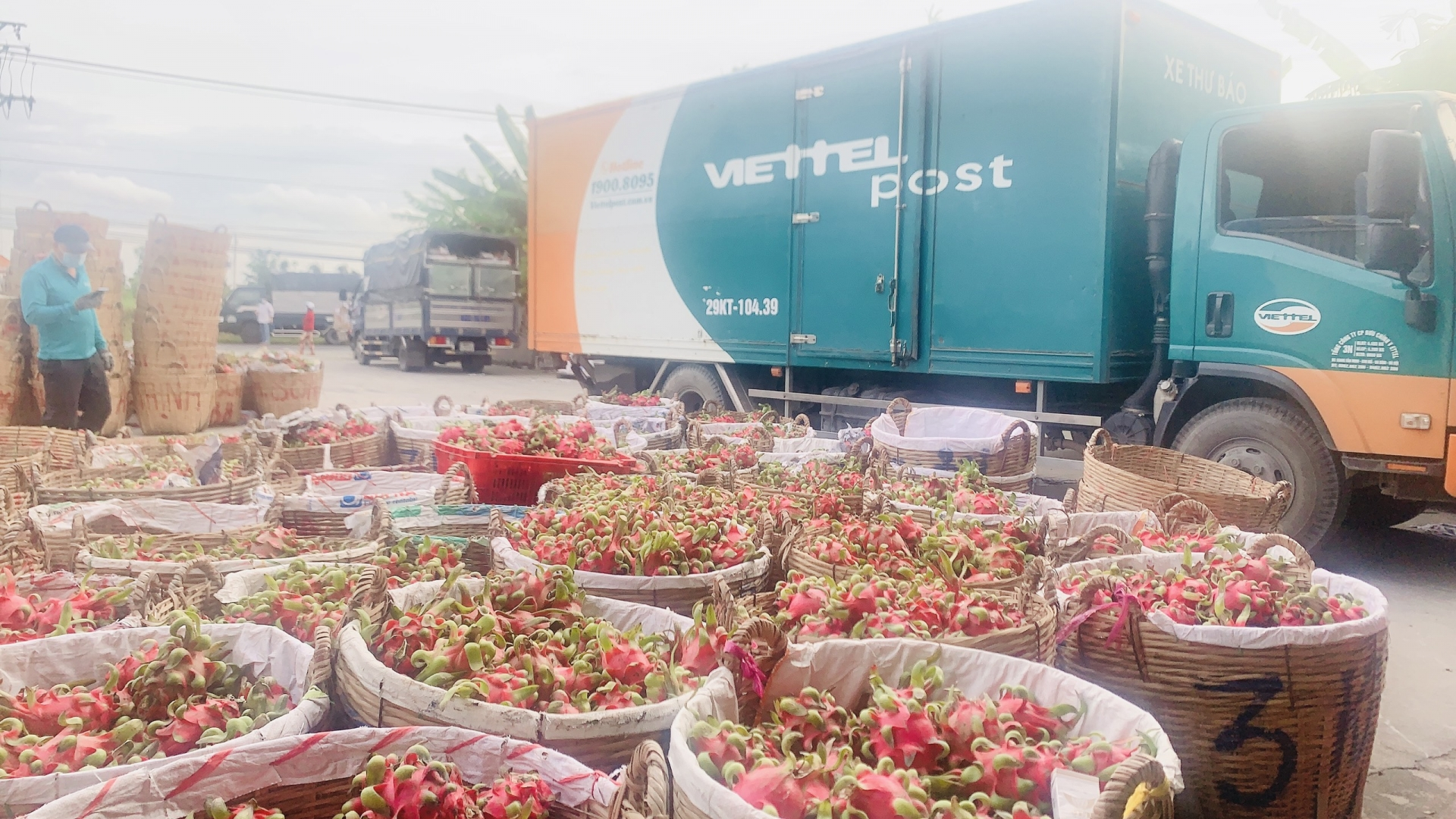 diversified solutions implemented to support farm produce sales