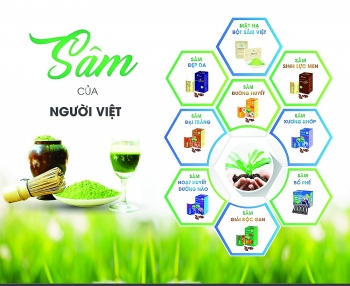 a startup story the value of vietnamese sarmentosa