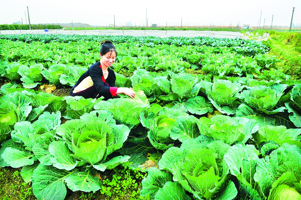 new decree to help organic agriculture