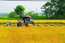high tech boost vital for vietnams farming in 21st century