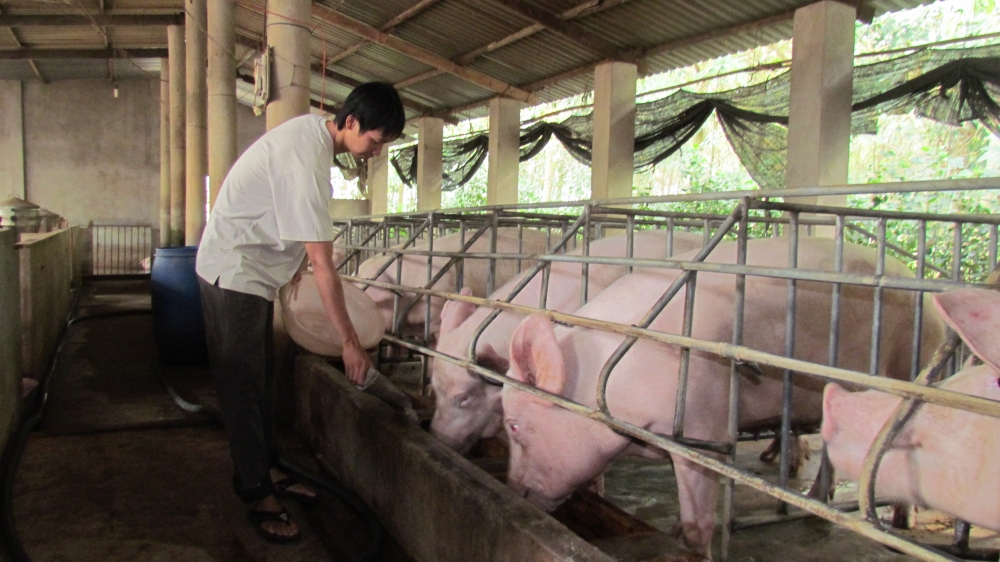 the untapped potential of pork exports