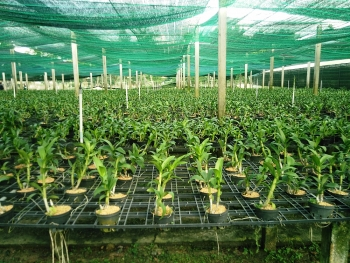 hcmc ploughs ahead with high tech agriculture