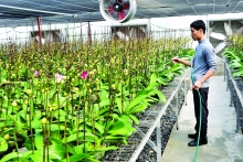 hanoi seeks to capitalize on sci tech for farming