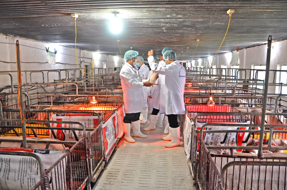 livestock sector aims to enhance quality safety