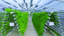 hi tech agriculture grows up in ba ria vung tau