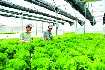 japanese boost investment in vietnamese agriculture