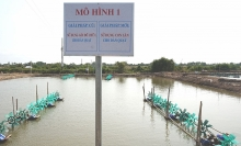 evn helps shrimp farmers save electricity