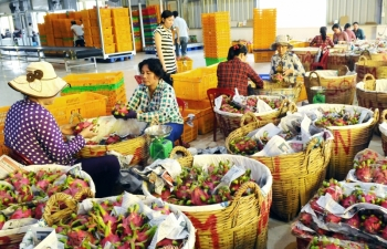 potential grows for vegetable and fruit exports to the us