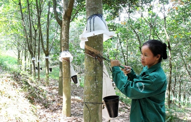 rubber companies set cautious profit targets this year
