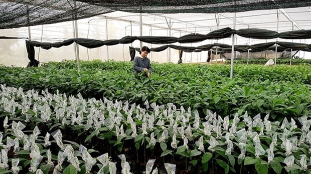 forestry sector focuses on creating high yield trees