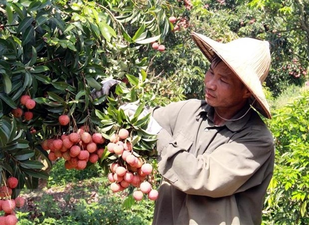 export target of us 41 billion within reach for agricultural sector