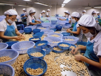 vietnam seeks to stay on top of world cashew market