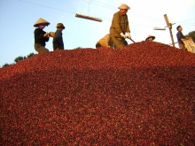 coffee exports target doubling to us 6 billion