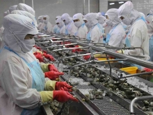 shrimp exports expected to increase in 2018
