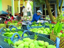 farm produce exports to discerning markets grow