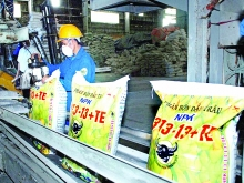 fertilizer businesses restructuring production boosting exports