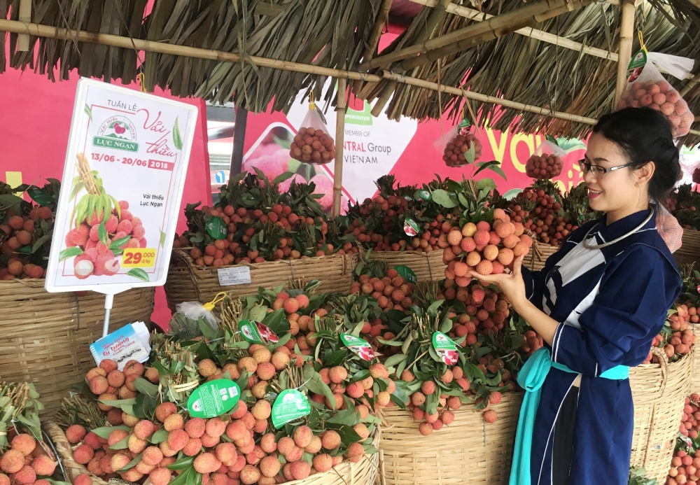 bac giang litchi growers opt for quality over quantity