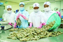 new us regulations expected to hurt vietnamese shrimp exports