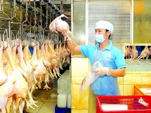 positive signals for chicken exports to japan