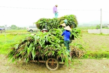 vietnam seeks ways to develop biomass energy