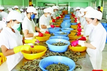 efforts underway to reopen eu to vietnamese seafood