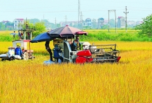 new decree facilitates direct rice exports