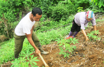 Shortcomings in sustainable forest certification