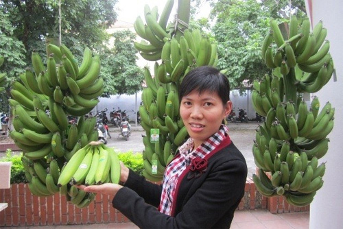 Khoai Chau banana receives collective brand recognition