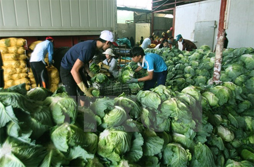 Hanoi to export agricultural products to Japan, Malaysia