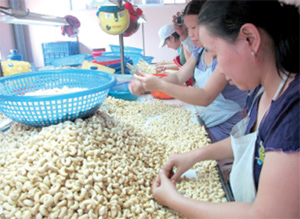 Vietnam, a cashew-nut power