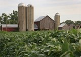 russia set to ban us corn soybean imports