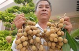 edor longan shipped to the us